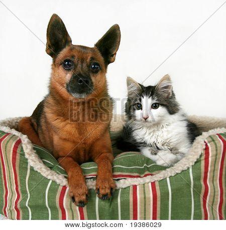 un perro y un gatito en una cama del animal doméstico