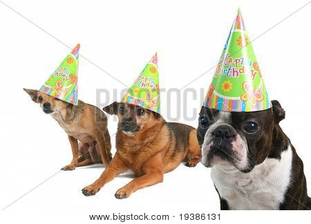 three dogs celebrating a birthday with hats on