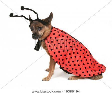 a dog dressed up as a ladybug