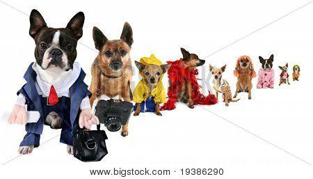 eine Parodie auf Geschäft Bilder aber mit Hunden