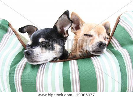 two dogs taking a nap in a pet bed