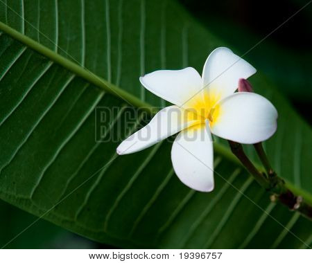 Tropical Flower On Green Background