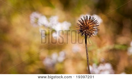 The Last Flower Standing