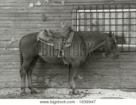Horse By Window