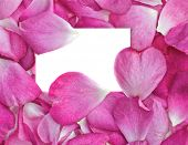 image of rosepetals  - beautiful pink rose petals with white card for your message - JPG