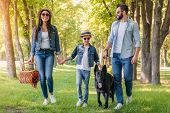 Young Happy Interracial Family With Picnic Basket Walking With Dog In Forest poster