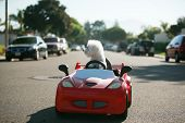 Dog car ride.  Dog enjoys a ride in a pedal car. Fifi the Bichon Frise, takes her Red Hot Rod Pedal  poster