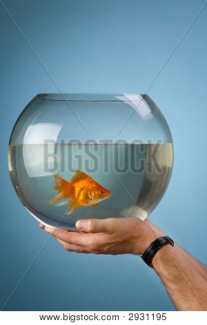 Gold Small Fish In A Round Aquarium