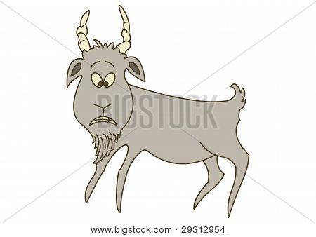 Sad grey goat