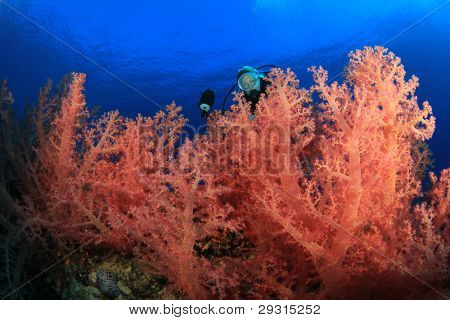 Beautiful Woman Scuba diver takes underwater photos of colorful Corals in the Red Sea