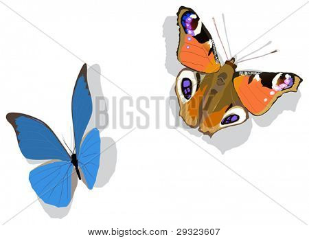 illustration with two butterflies isolated on white background