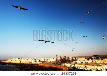 Seagulls over old medina of Essaouira, Morocco, Africa