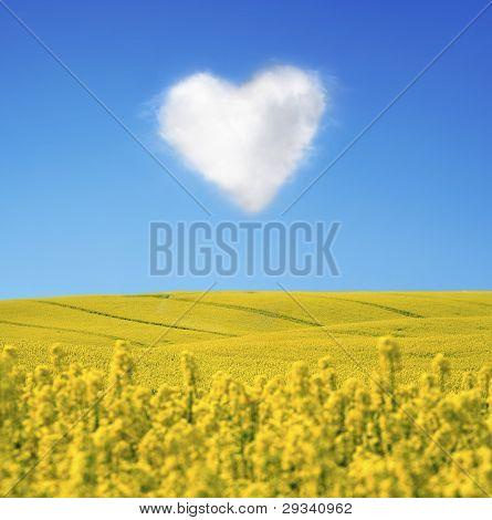 Oilseed And A Heart Shaped Cloud