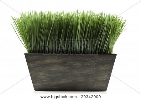 Planter With Grass