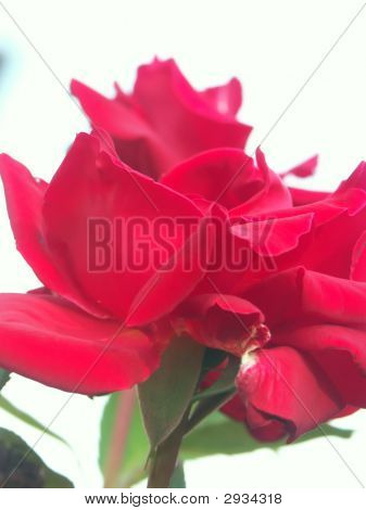 Rose-Soft
