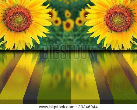 Sonnenblumen Zweibettzimmer im Bereich und Reflexion auf dem Boden