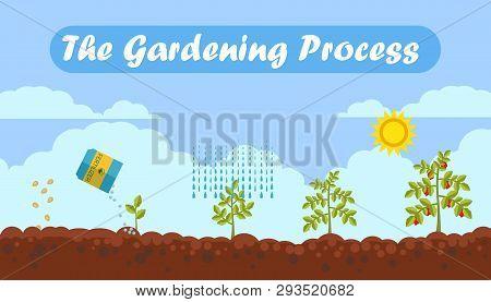 Gardening Process Flat Vector Banner
