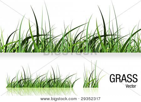 Grass vector isolated on white
