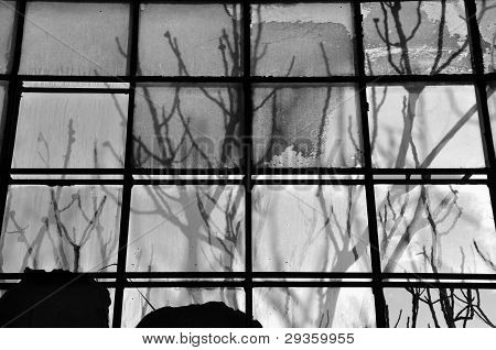 Branches Stained Glass