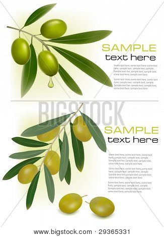 Two backgrounds with green fresh olives. Vector illustration.