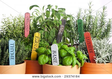 seven kinds of potted garden herbs with wooden name tags