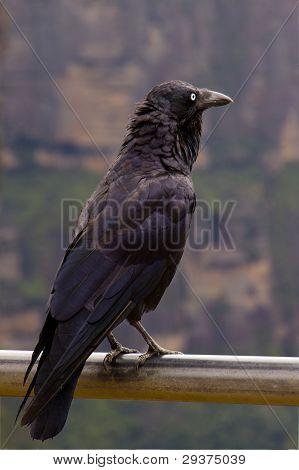 Raven Cliff