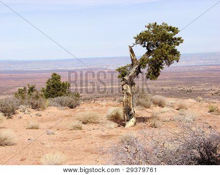 broken tree at edge of desert
