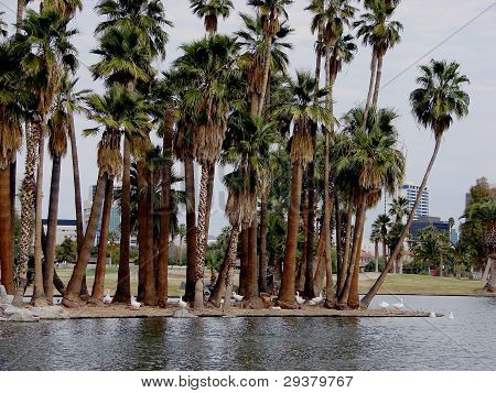 Palm trees by lake