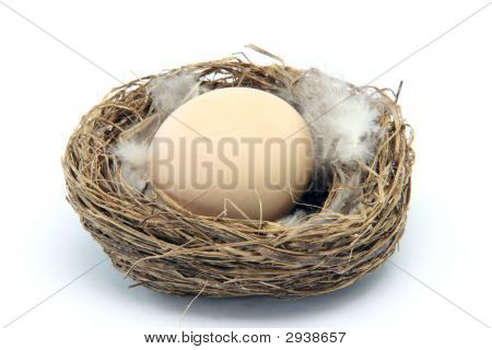 Brown Egg In Nest With Feathers