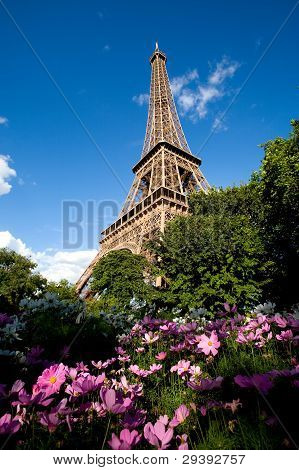 Eiffel Tower with pink flowers in the foreground
