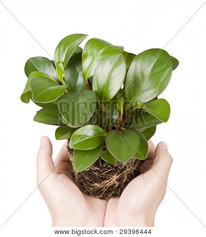 houseplant in hand