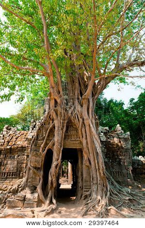 Ta Som Temple, nearly covered by giant trees, Angkor, Cambodia