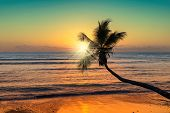 Spectacular Sunset Over The Sea With Coco Palm Over The Beach In Jamaica Caribbean Island, Vintage P poster