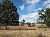 Evergreen Trees And Prairie Grass In The Elk Meadow Park In Evergreen, Colorado.  There Is A Bright  poster