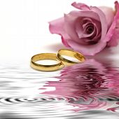 stock photo of pink roses  - Golden wedding rings and fresh roses to say I love you - JPG