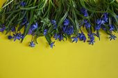 Blue Flower. Flower In The Garden On A Sunny Summer Or Spring Day. Flower For Postcard Beauty Decora poster