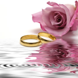 foto of pink rose  - Golden wedding rings and fresh roses to say I love you - JPG