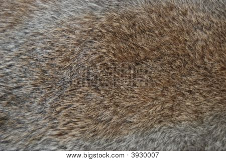 Natural Rabbit Fur