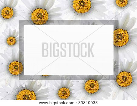 Fresh Chamomile Flowers On Vertical White Frame