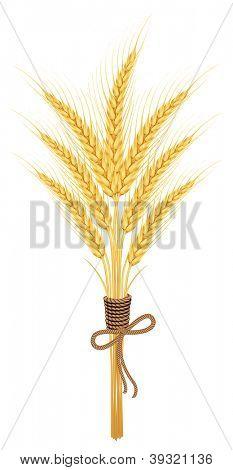 Ears of wheat.vector