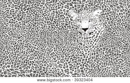 Fondo de piel de Jaguar