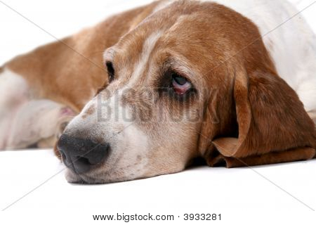 Sad Looking Dog