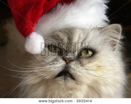Scrooge Kitty
