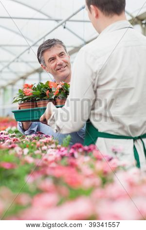 Man holding boxes of plant looking at employee in greenhouse