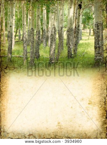 Aspen Background