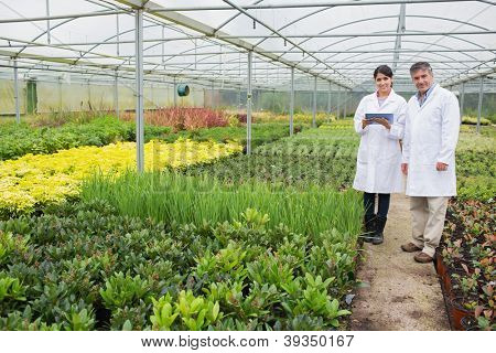 Greenhouse workers standing with a tablet pc in the nursery