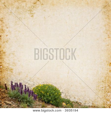 Wildflower Background
