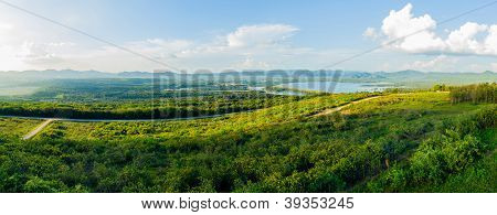 Panorama Of Mexican Sunflower Weed Field