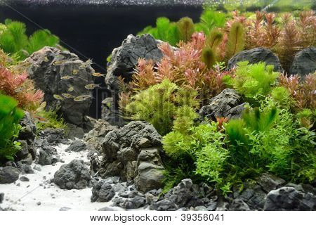 aquarium decoration