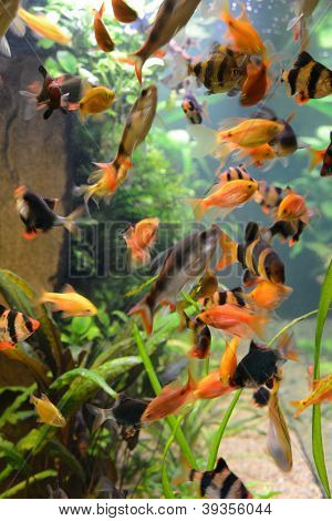 fish school in aquarium